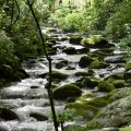 the smoky mountains national park in Tennessee