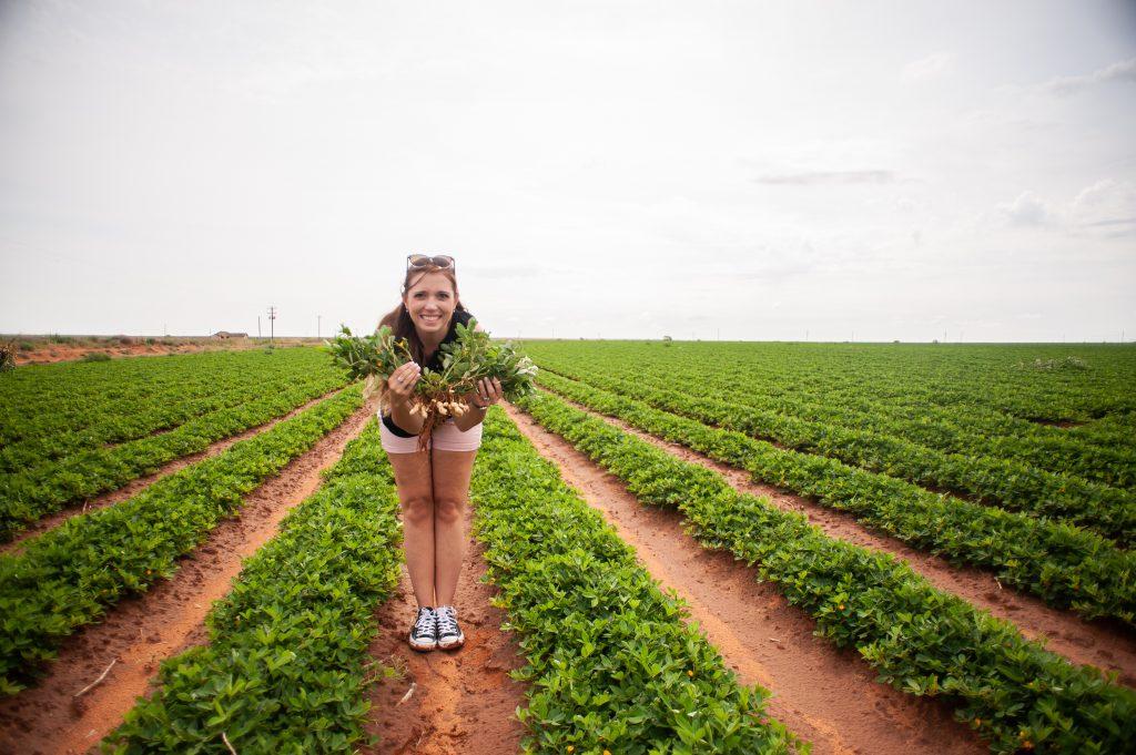 Touring the peanut farms