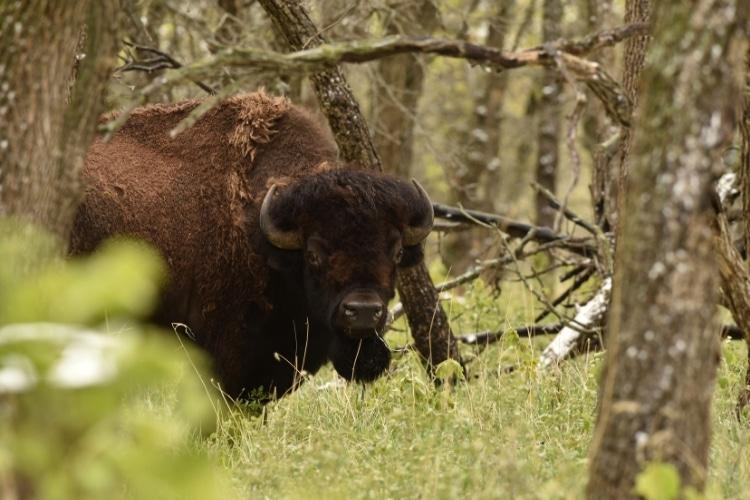 The wildlife at Devils Lake North Dakota